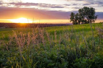 Sunset meadow on farmlands