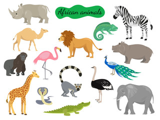 Set of african animals on white background.