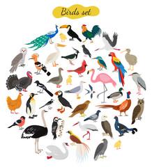 Set of birds on white background.
