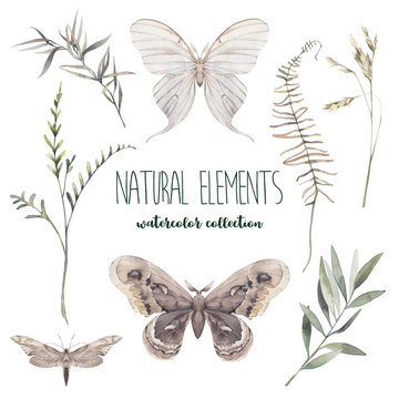 Watercolor decorative floral and butterflies set. Hand painted moth and botanical elements: plants, grass, berries, fern, leaves. Natural objects isolated on white background