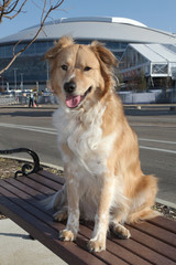 Portrait of a Texas Dog