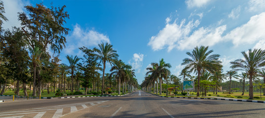 Panoramic view of asphalt road framed by trees and palm trees with partly cloudy sky in a summer day, Montana public park, Alexandria, Egypt