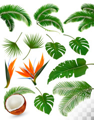 Set of tropical leaves and exotic flowers isolated on transparent background. Vector illustration.