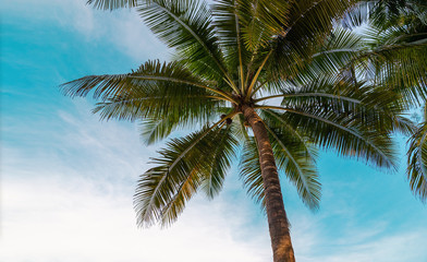green exotic palm trees o0n the beach in front of blue sky with sunshine background with copy space