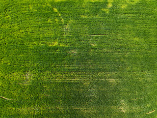 Wall Mural - Aerial view green field in the countryside. Photo from the drone