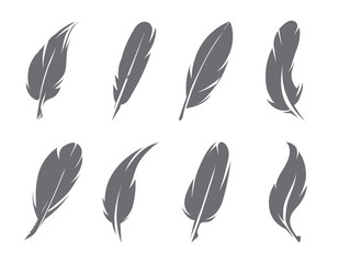 Vector illustrations of feathers