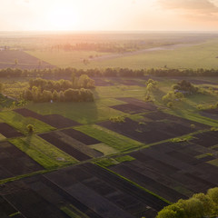 Wall Mural - Aerial view of the field and trees at sunset. Photo from the drone