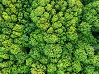 Aerial view beautiful deciduous forest. Photo from the drone