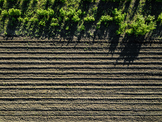 Wall Mural - Aerial view cultivated rural field, agriculture