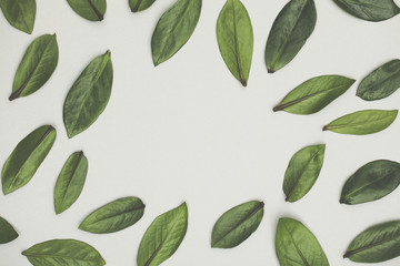 Green leaves arranged on a white background. Lay flat background