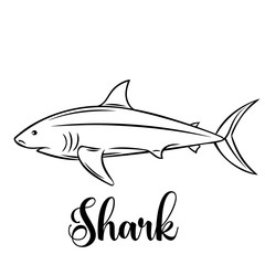 Vector shark.