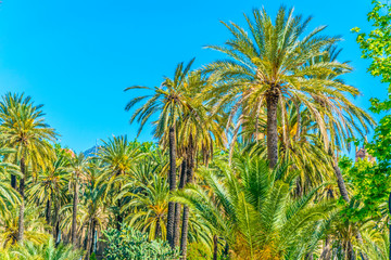 View of palms in the park villa bonanno in Palermo, Sicily, Italy