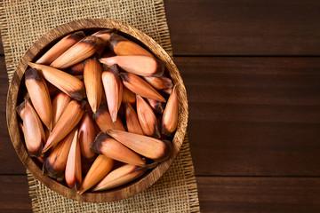 Chilenische Pinones Pinienkerne der Chilenischen Araukarie (lat. Araucaria araucana), die in Chile gekocht als Snack oder püriert als Kochzutat benutzt werden