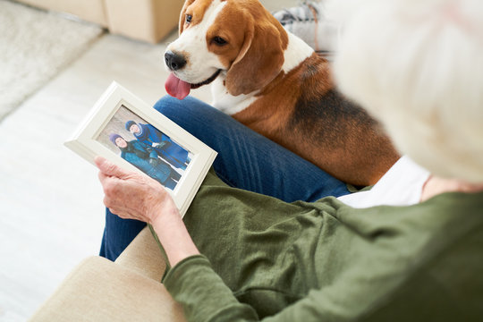 High angle portrait of unrecognizable senior woman holding photograph and remembering husband while sitting in comfortable armchair at home with her dog photo in frame by me .