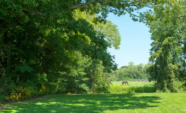 Horse and Meadow