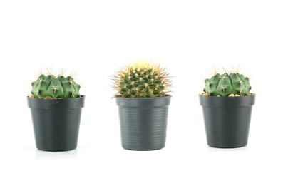 fresh green cactus in a plastic flower pots of Collection set.