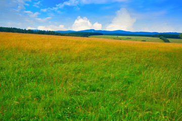 Green meadow in Harz forest of Germany