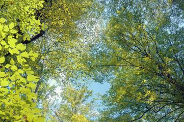 Осенний лес на Кавказе,Краснодарский край, Россия