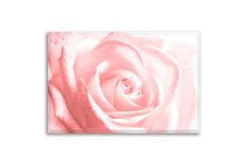 Floral canvas isolated on white, interior decor mockup. Beautiful pink rose flower. Wall art photography