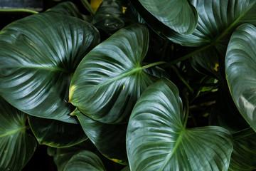 Big green leaf for flower arrangement.