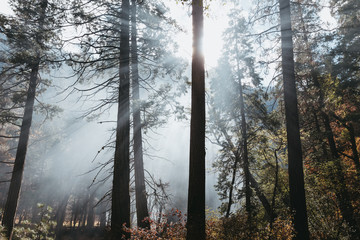 Sunlight through the smoke