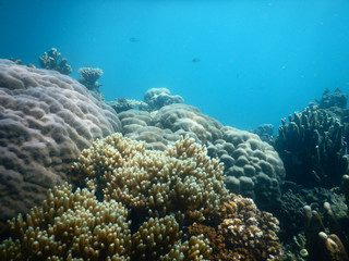 Underwater scenery with gorgeous coral