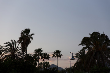 Palm trees at sunset..