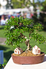 Decorative bonsai trees in a showcase on the flower market.