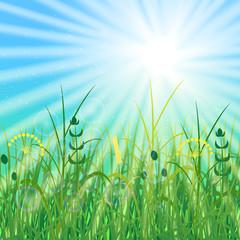 Concept Summer Solstice. Sky, blur, field grass, sun, the lights of a sun