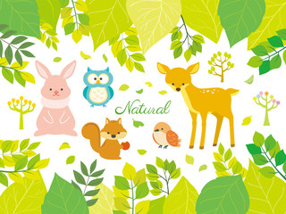 Nature and animal illustrations