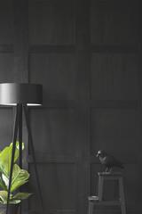 Dark minimal living room