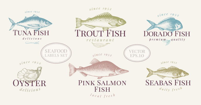 Hand drawn fish and seafood labels set in retro style. Vector logo templates. Labels can be use for restaurant menu fish shop market.