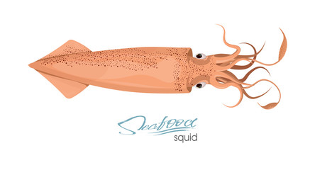 Squid of red color design flat. Red squid with tentacles isolated on white background. Creature floating in water. Inhabitant wildlife of underwater world. Edible sea food. Vector illustration