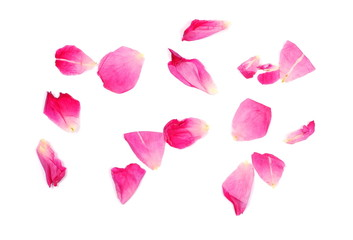 Withered red rose petals isolated on white background