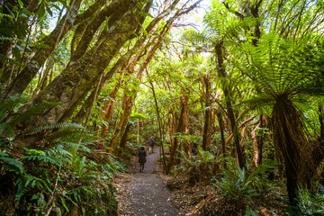 A backpacker man with trekking gears walking on the path in the green fresh rainforest.
