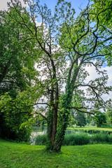 Amazing green tree in bally park schoenenwerd