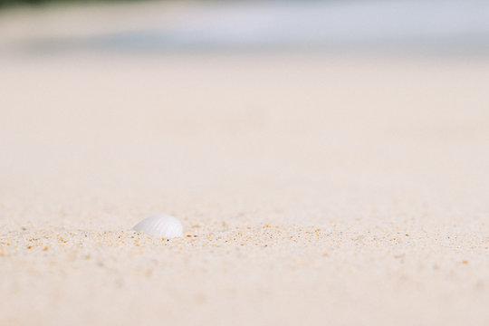 seashell in sand on the beach