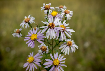 Fieid flowers