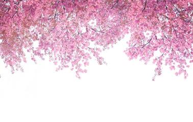 Papiers peints Fleur de cerisier Cherry blossom frame use as background