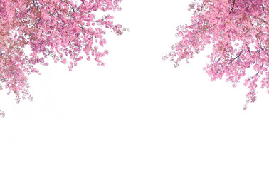 Cherry blossom frame use as background