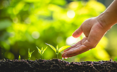 plant a tree Growing tree care tree And hands watering trees In nature