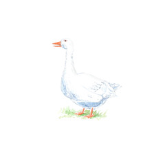 Goose on the grass.Farm animals.Watercolor hand drawn illustration.White background.