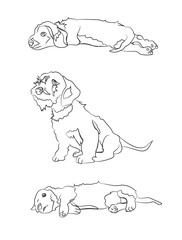 puppies which lies, sit, lines, vector
