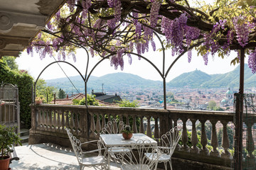 Fantastic veranda covered by colorful wisteria. Private garden, terrace.