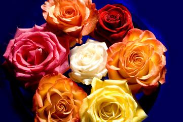 Rose Blume Königin der Blumen rot liebe Valentins Tag Rosen Schale