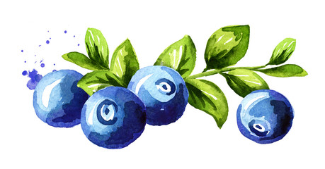 Blueberry composition. Fresh berries with leaves and branch. Hand drawn watercolor illustration  isolated on white background