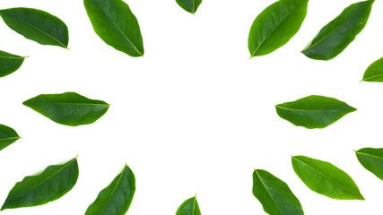 Fototapete - flat lay green leaf isolated on white background for creative nature backdrop