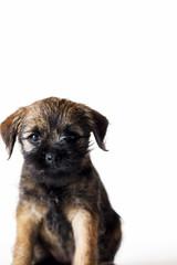 Little beautiful puppy