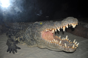 Photo sur Plexiglas Crocodile crocodile danger in water, attack people