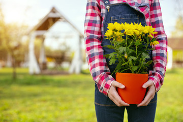 Floristic decorations. Close up of flowers in the pot being held by a nice pleasant cute girl